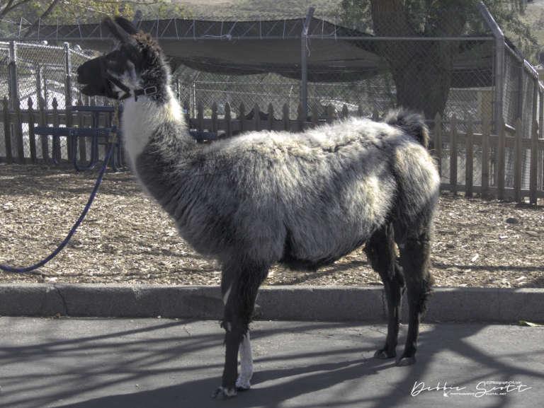 WPC - Tour Guide Llama 2