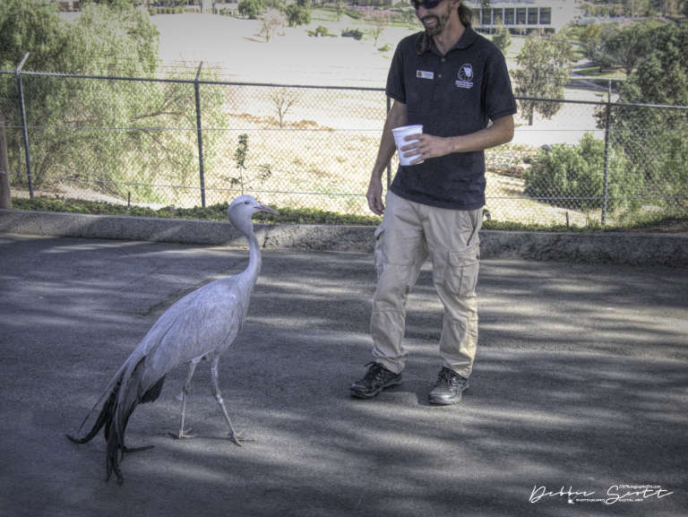 WPC - Tour Guide Blue Crane and Trainer
