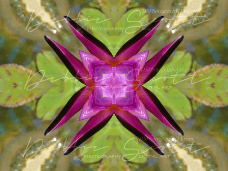 Water Lily Kaleidoscope 1