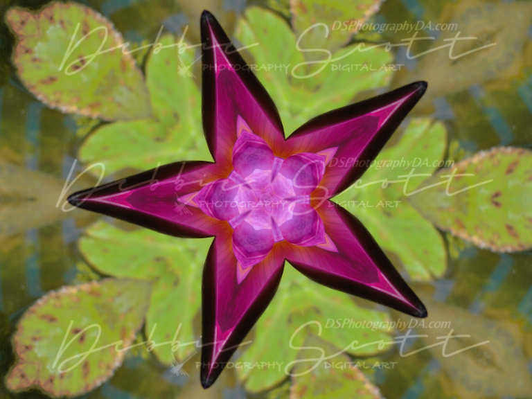 Water Lily Kaleidoscope 4