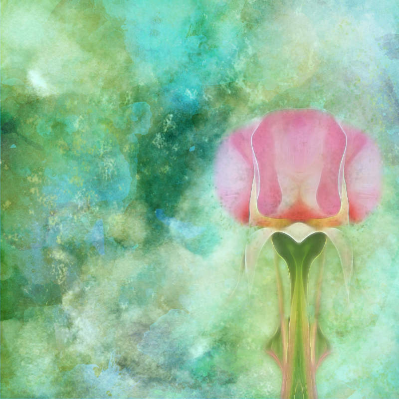 Step 6 Masked the flower - Changed opacity