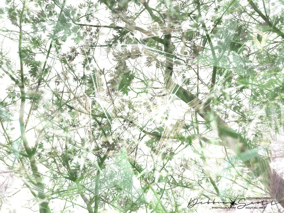 Under the Mimosa Tree