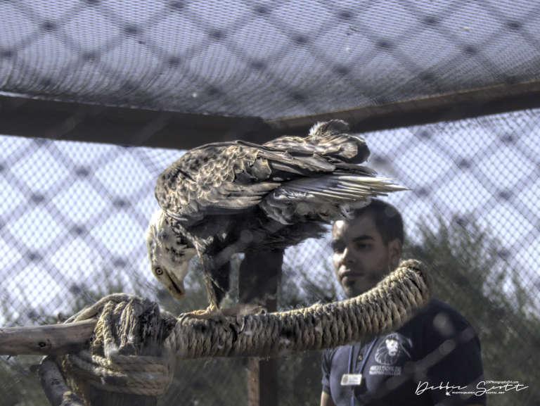 WPC - Tour Guide Eagle Feeding Time