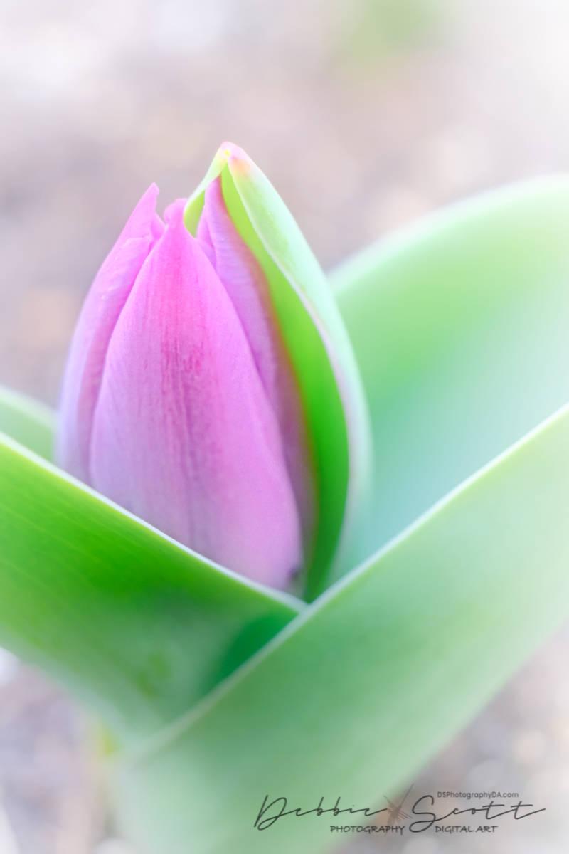 Dreamy Spring