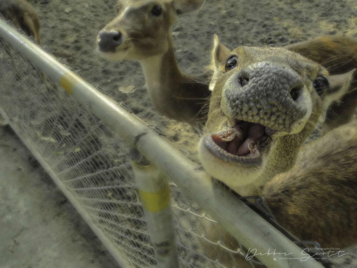 WPC Smile - Smiling Deer