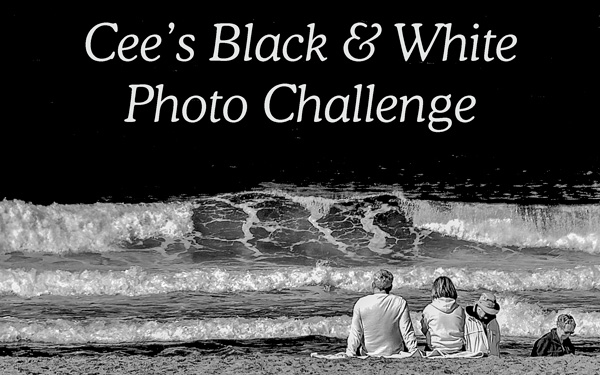 Cee's Black & White Banner