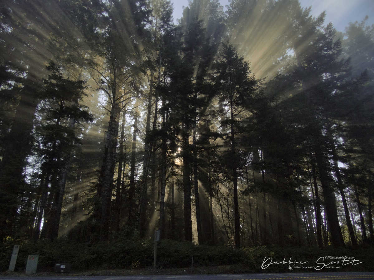 WPC Lines - Light Rays 1