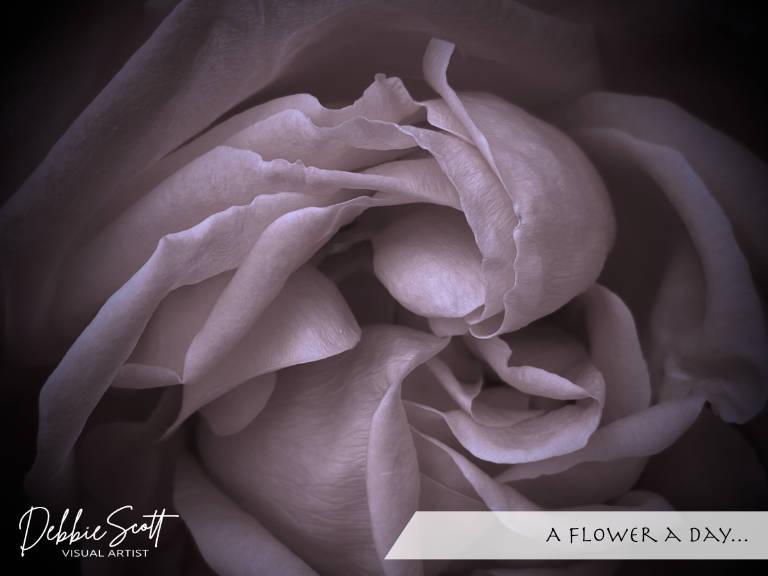 A Flower a Day...