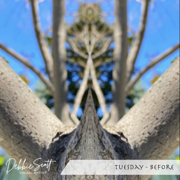 Cuckoo - Before