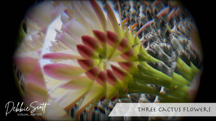 Three Cactus Flowers