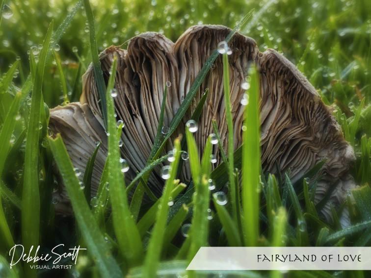 Fairyland of Love
