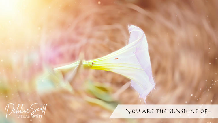 You Are the Sunshine of...